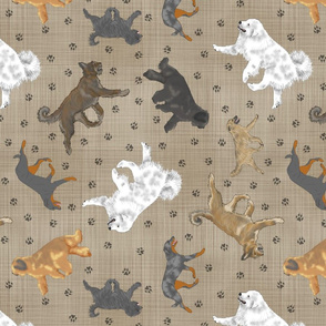 Trotting Shepherding dog breeds of France - faux linen