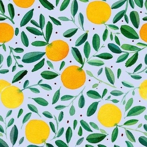 Summer tropical orange tree branches