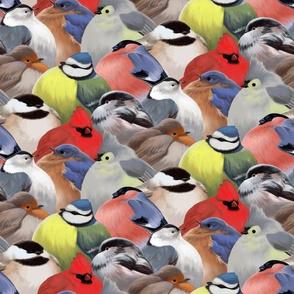 Overfed Winter Backyard Birds