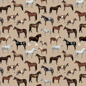 Horse and Pony Breeds on Tan