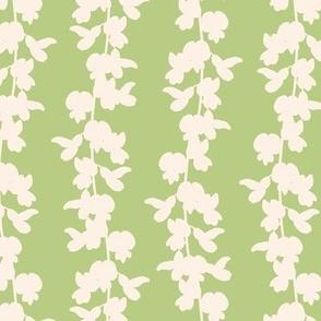 White Acacia on green