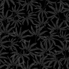 Maidenhair Fern Prints on Black