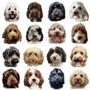 Doodle Dog Collection on White