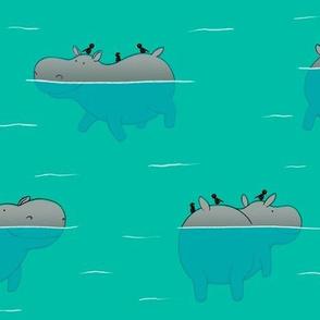 Swimming Hippo's