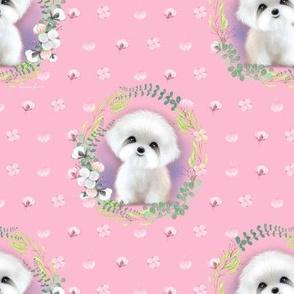 Sugar Maltese pink M