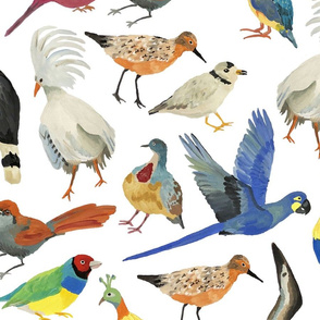 Endangered Birds - LARGE