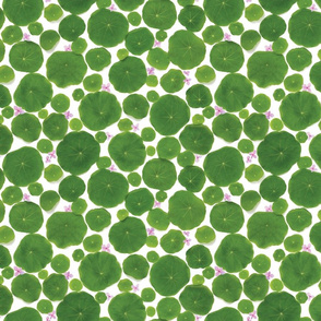 nasturtium leaves pattern pink flowers4 copy