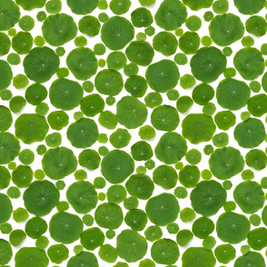 nasturtium leaves pattern final