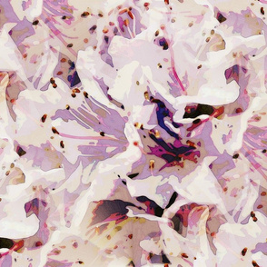 Lilac powder rodondendron