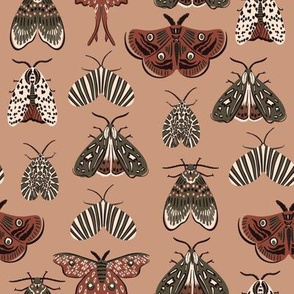 Moth butterflies in earthy colors