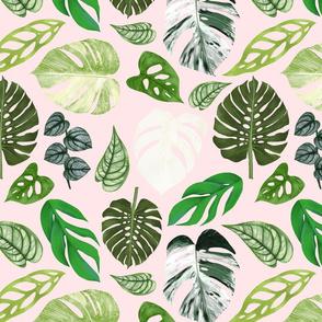 Monstera Foliage - Small