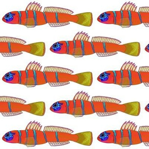 Bluebanded Goby old print style