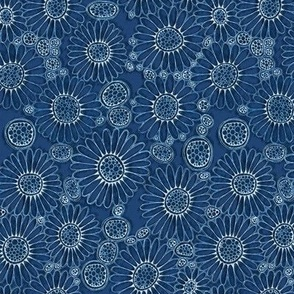 Field of blue daisies