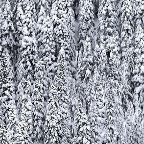 PNW Snowy Trees
