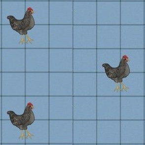 Chickens on Blue Squares