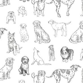 Big Dog Line Art on White