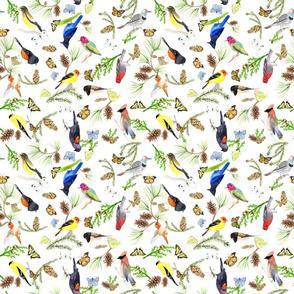 BirdsButterfliesEvergreens white