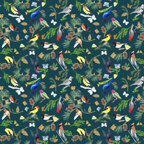 BirdsButterfliesEvergeens - midnight