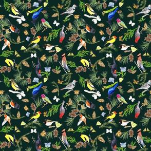 BirdsButterfliesEvergreens - darkforest