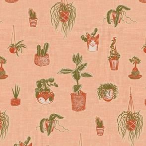 House Plants - soft pink