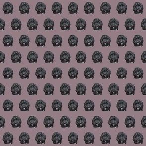 Black Cockapoo Doodle Dog