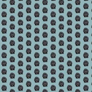 Black Cockapoo / Doodle Dog