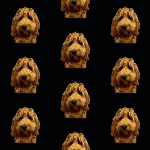 Red Cockapoo /  Doodle Dog