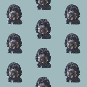 Black Cockapoo & Doodle Dog