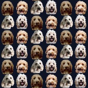 Golden Cockapoo & Doodle Dogs