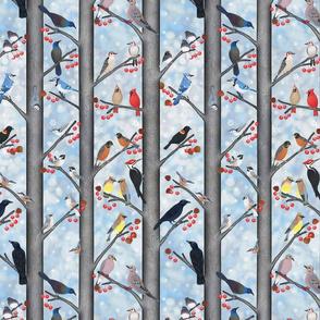 Winter Birds of North America 10X15