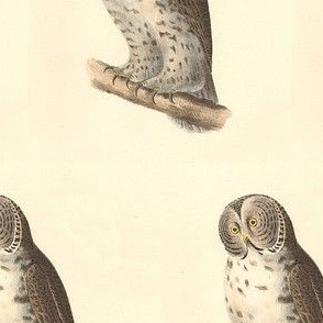 The Great Grey Owl - Vintage Bird / Birds of Prey Print