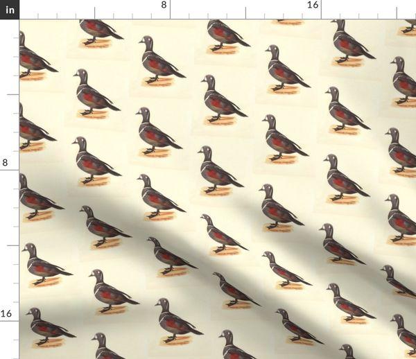 26+ Harlequin Wallpaper Birds PNG