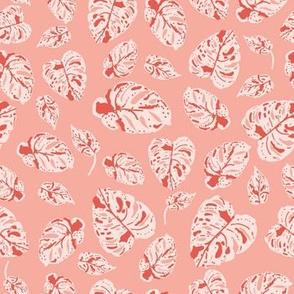Tropicana variegated monstera in pink