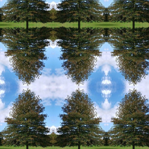 Trees Mirrored