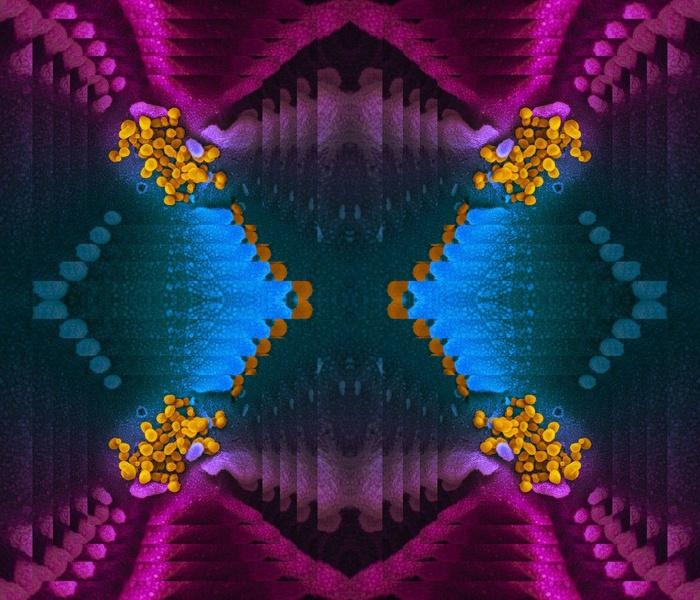 Microscopic Novel Coronavirus