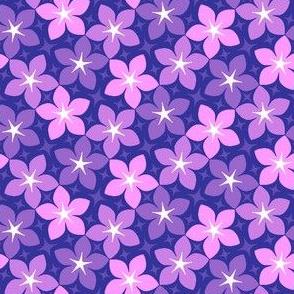 10847182 : S43CVflora : dreamy