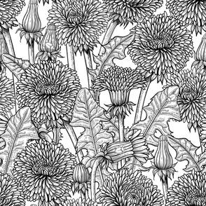 Dandelion meadow,B&W