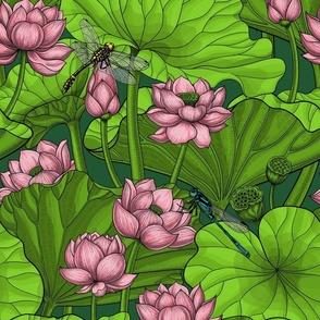 Lotus garden on dark green