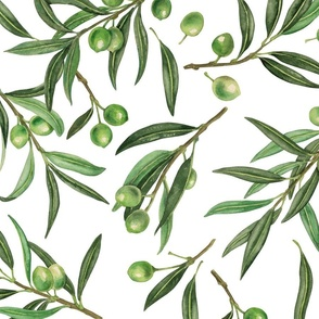 Olive branches watercolor on white