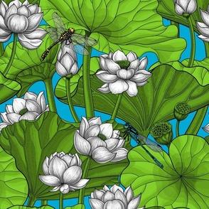 White Lotus garden