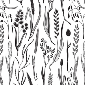 Wild grasses in black and white