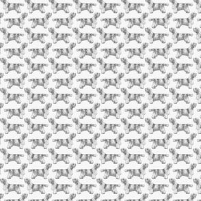 Small Standing Petit Basset Griffon Vendeen - gray