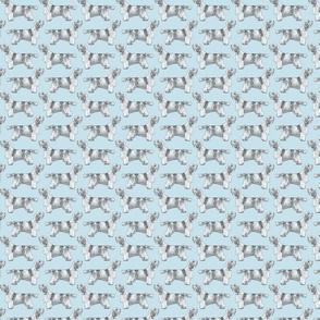Small Standing Petit Basset Griffon Vendeen - blue