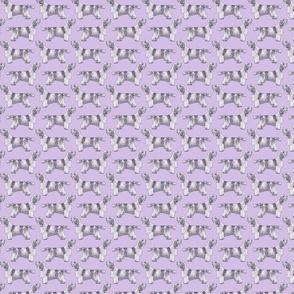 Small Standing Petit Basset Griffon Vendeen - purple