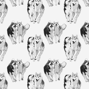 Playful Siberian Huskies - gray