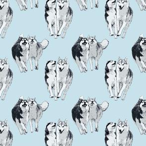 Playful Siberian Huskies - blue