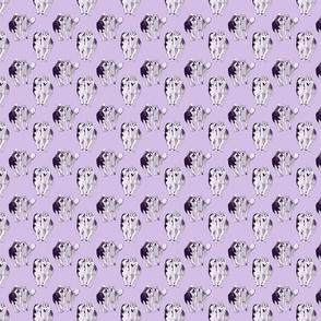 Small Playful Siberian Huskies - purple