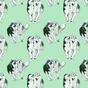 Playful Siberian Huskies - green