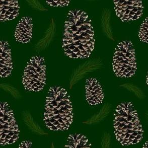 pine cones and needles - evergreen