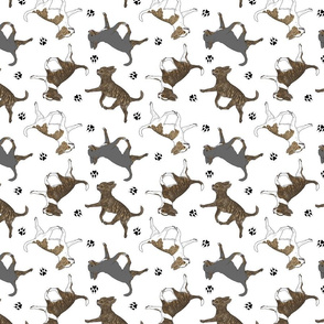 Trotting brindle smooth coat Chihuahuas and paw prints - white
